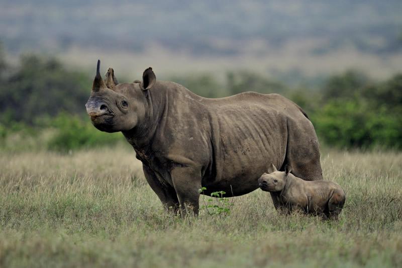 Kenya budget safaris and budget Kenya safaris for Kenya
