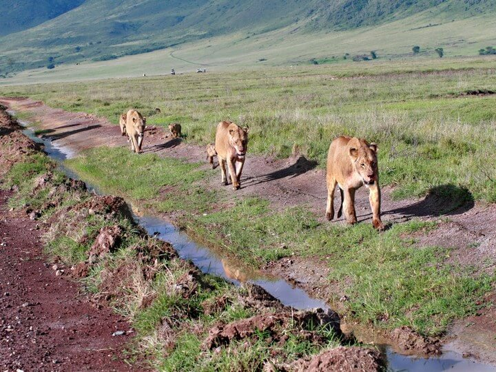 3 Days Ngorongoro Crater Tanzania Lodge Safari